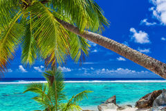 Palm trees on the beach, tropical Cook Islands, Rarotonga. Palm trees on the vibrant beach, tropical Cook Islands, Rarotonga royalty free stock images