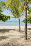 Palm trees on beach Stock Photography