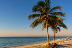 Palm trees on the beach of a tropical island in Cuba Cajo Jutia. S Stock Photography