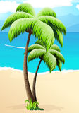 Palm trees on a beach Royalty Free Stock Image