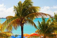 Palm Trees and Beach Umbrellas Stock Photo