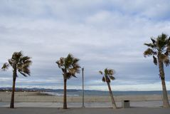 Palm trees in the beach of Valencia, Spain. Panorama of cloudy beach with waves of the sea. Empty spring beach of Royalty Free Stock Photography