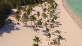 Palm trees on the beach view from above stock photo