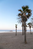 Palm trees on beach Stock Images