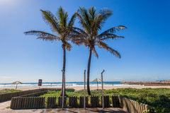Palm Trees Beachs Blue Sea  Royalty Free Stock Photos