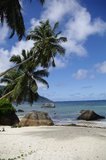 Palm trees at Beau Vallon beach, Seychelles Royalty Free Stock Images