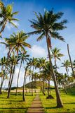 Palm trees on the beautiful Anakena beach, Easter Island Royalty Free Stock Images