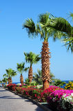 Palm trees,beautiful flowers and footway in tropical garden Stock Image