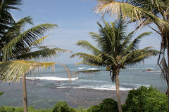 Palm trees. With the beautiful Indian Ocean in the background Stock Photos