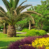palm trees in a beautiful park Stock Photography