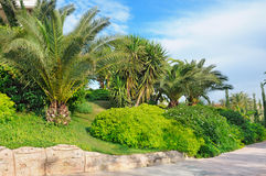 palm trees in a beautiful park Stock Image