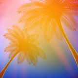 Palm trees with beautiful sunset. Royalty Free Stock Images