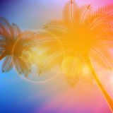 Palm trees with beautiful sunset. Royalty Free Stock Image