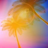 Palm trees with beautiful sunset. Stock Photo