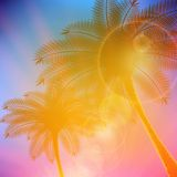 Palm trees with beautiful sunset. Stock Photos