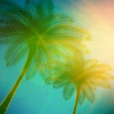 Palm trees with beautiful sunset. Royalty Free Stock Photo