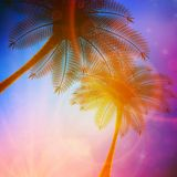 Palm trees with beautiful sunset. Stock Images
