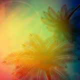 Palm trees with beautiful sunset. Royalty Free Stock Photography