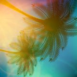 Palm trees with beautiful sunset. Stock Photography