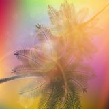 Palm trees with beautiful sunset. Royalty Free Stock Photos