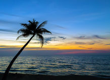Palm trees on the beautiful sunset Tropical landscape sea Stock Image