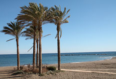 Palm trees on Benalmadena beach Royalty Free Stock Photos