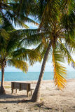 Palm Trees and Bench Royalty Free Stock Photos