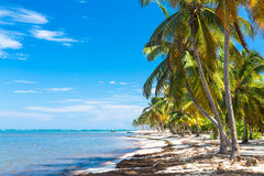 Palm trees bent over the ocean, Dominican Republic Stock Photo