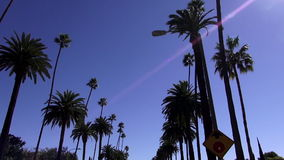 Palm trees in Beverly Hills California LOS ANGELES. Palm trees in Beverly Hills California City of Los Angeles California stock video footage