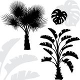 Palm trees black silhouettes on white background Royalty Free Stock Photo