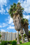 Palm trees in Blanes,Spain Royalty Free Stock Photography