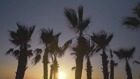 Palm trees blowing against the wind in sunset sky background. Palm trees blowing against the wind in the sunset sky background stock video