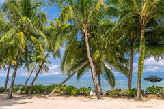 Palm Trees blowing in a warm ocean breeze Royalty Free Stock Photography