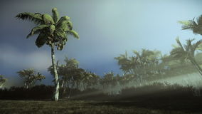 Palm trees blowing in the wind, morning mist. Hd video stock illustration