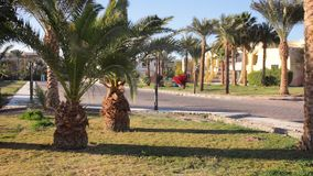 Palm trees blowing in the wind. Rich vacation on the sunny resort. Empty hotel in Hurghada, Egypt stock video footage