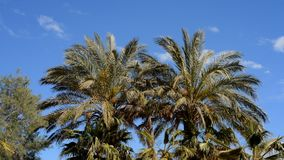 Palm trees blowing in the wind. Spain stock footage