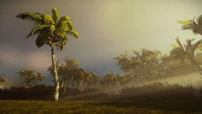 Palm trees blowing in the wind at sunrise. Hd video stock video footage