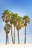 Palm trees and blue beach Royalty Free Stock Image