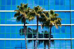 Palm Trees With Blue Building Windows Royalty Free Stock Image