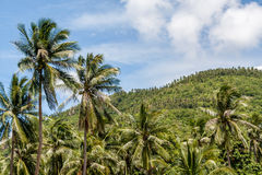 Palm trees on blue cloudy sky and mountain background. Royalty Free Stock Photography