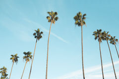 Palm trees in blue skies Royalty Free Stock Photos