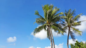 Palm trees in the blue Royalty Free Stock Photo