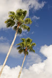 Palm Trees and Blue Sky Royalty Free Stock Photography