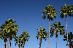 Palm Trees and Blue Sky Abstract Royalty Free Stock Image