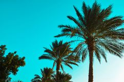 Palm trees on background of blue sky royalty free stock photography