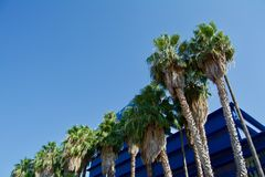Palm trees on the blue sky background. Nice palm trees in the blue sunny sky royalty free stock photos