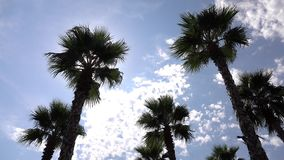 Palm trees on blue sky background. Panorama palm trees on blue sky background stock video