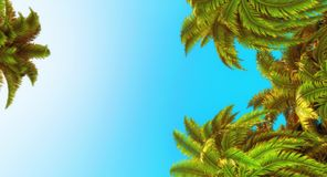 Palm trees and blue sky royalty free stock images