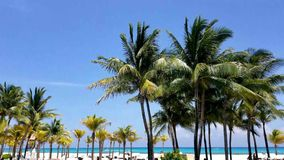 Palm trees, blue sky and bright aqua ocean water stock footage