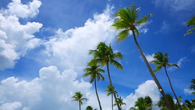 Palm trees and blue sky . Palm trees and blue sky in the Caribbean stock video footage